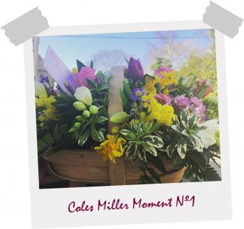 Coles Miller Moment 1 - Flowers